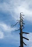 Ominous tree. A lone ominous looking tree against a blue sky royalty free stock images