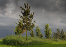 Ominous wheather. Trees in the light of the setting sun against a stormy background royalty free stock image
