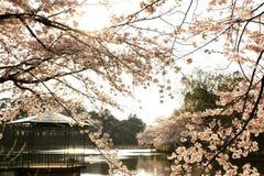 Omiya park fotografia stock