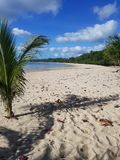 Omkring att växa länge denna palmträd i stranden royaltyfria foton