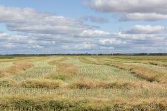 Omlindat skördfält Royaltyfria Foton