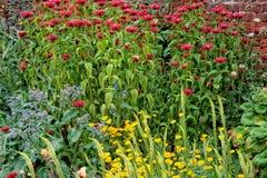 Ommuurde tuin Stock Afbeelding