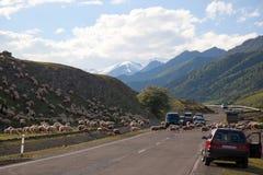 Omnibus militaire géorgien de croisement de moutons. La Géorgie. Photo stock