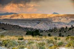 Område för Bighornfår arkivfoton