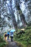 Område för Cilan skogrekreation på Yilan Taiwan Arkivbild