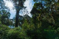 Omringd door het bos Royalty-vrije Stock Fotografie