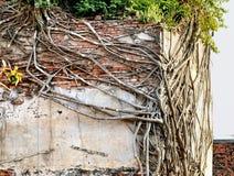Omroeper en boomwortels stock foto's