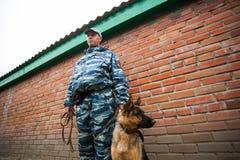 Omsk, Rússia 26 09 centro 2014-Canine fotografia de stock royalty free