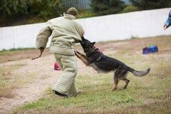 Omsk, Rússia 26 09 centro 2014-Canine imagem de stock