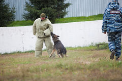 Omsk, Rússia 26 09 centro 2014-Canine para cães de polícia imagens de stock royalty free