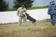 Omsk, Rússia 26 09 centro 2014-Canine Pastor alemão de formação imagens de stock