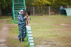 Omsk, Russia - August 22, 2014:  Canine Center Training Royalty Free Stock Photos