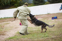 Omsk, Russia 26.09.2014-Canine Center. Stock Image