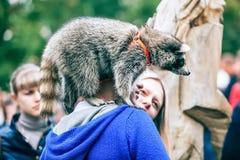 Omsk Ryssland - September 7, 2014: Festival för tvättbjörndagstad arkivbilder