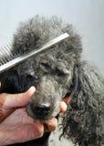 Omsorg av en hund Arkivbild