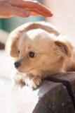 Omsorg för en hund Royaltyfria Foton