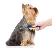 Omsorg för hundhår bakgrund isolerad white Royaltyfria Bilder