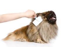 Omsorg för hundhår bakgrund isolerad white Arkivbild