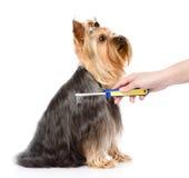 Omsorg för hundhår På vitbakgrund Royaltyfri Fotografi