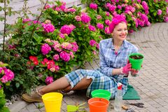 Omsorg och bevattna för blomma jorder och gödningsmedel Växthusblommor lycklig kvinnaträdgårdsmästare med blommor hydrangea fotografering för bildbyråer