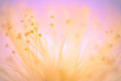 Omvänd lensemakro av glödtrådar för en blomma Ett experiment genom att använda 5 Royaltyfria Bilder