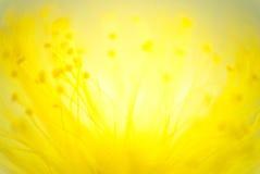 Omvänd lensemakro av glödtrådar för en blomma Ett experiment genom att använda 5 Royaltyfria Foton