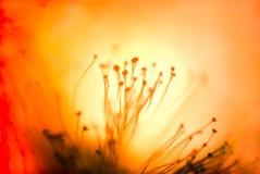 Omvänd lensemakro av glödtrådar för en blomma Ett experiment genom att använda 5 Royaltyfri Bild