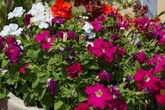 omväxlande trädgård av färgrika blommor i Spanien royaltyfri fotografi