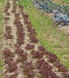 Omvandlat till jordbruksmark Royaltyfri Foto