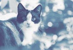 Omzichtige binnenlandse kat met wijd open ogen in de tuin royalty-vrije stock afbeeldingen