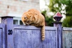 Omzichtige kat ?? een omheining. De kat neemt tensely een hond waar. toont huis n Stock Fotografie