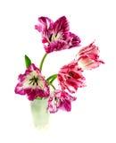 Omzoomde tulp Royalty-vrije Stock Afbeeldingen