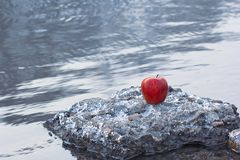 On A Background Of A Cold Winter River There Is An Apple Of Red Color On A Stone Royalty Free Stock Photography