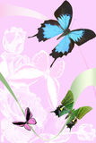 On Rose Background Of The Butterfly Royalty Free Stock Photography