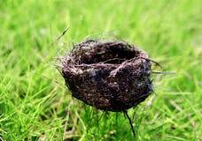 Free On The Grass Of Niaowo Stock Image - 6367041