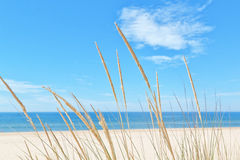 Free On The Summer Beach Kind Of Grass . Stock Photos - 30957163