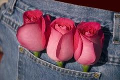 ona ja kocham róże Zdjęcia Royalty Free