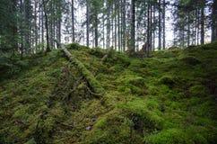 Onaangeroerd oud bos Stock Afbeelding