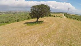 Onaangeroerde enige boom en eindeloos groen landschap, bepaling van aardwet op planeet stock video