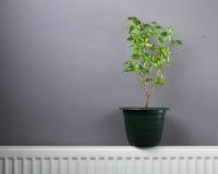 Onafhankelijk huis het verwarmen concept stock foto