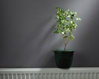 Onafhankelijk huis het verwarmen concept royalty-vrije stock afbeelding