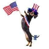 Onafhankelijkheid dag vierde van juli-hond stock foto's
