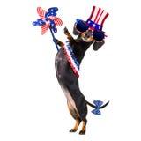 Onafhankelijkheid dag vierde van juli-hond royalty-vrije stock afbeelding