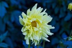 Onbekende bloem Royalty-vrije Stock Afbeeldingen