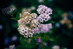 Onbekende bloemen in mijn buitenhuis Royalty-vrije Stock Afbeelding