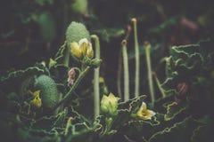 Onbekende bloemen op het strand Stock Foto