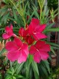 Onbekende rode bloemen Stock Afbeeldingen