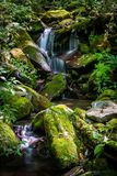 Onbekende Waterval in Smokies royalty-vrije stock fotografie