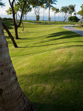Onberispelijk gazon, palmen Maui Hawaï Stock Afbeeldingen