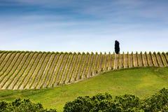 Onberispelijke rijen van de wijngaard van Toscanië Royalty-vrije Stock Afbeelding